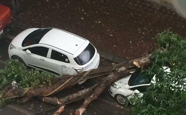 Cây đổ vào xe có được bảo hiểm vật chất xe bồi thường?
